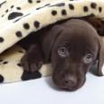 Eine der beängstigendsten Notfälle beim Hund ist die Magendrehung. Betroffenen von diesem absolut lebensbedrohlichen Zustand sind vor allem große ältere Hunde. Oft entwickelt sich die Magendrehung ganz plötzlich während des […]