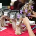 Mit dem Shih-Poo wurde ein Designerhund gezüchtet, der die Eigenschaften des Shih-Tzu und des Pudels in sich vereint. Mit seinem Stockmaß zwischen 20 und 28 cm und einem Idealgewicht von […]