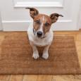 Nicht immer stehen Familienmitglieder zur Betreuung des Vierbeiners zur Verfügung, wenn die Arbeit ruft. Hilfe versprechen in diesen Fällen Hundetagesstätten, in denen die Hunde während der Arbeitszeit von Profis betreut […]