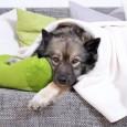 Grundvoraussetzung für die Haltung von Hunden in einer Mietwohnung ist die Zustimmung des Vermieters. Auch wenn das generelle Haustierverbot in Einheitsmietverträgen nach Meinung der Gerichte unzulässig ist, so ist dennoch […]