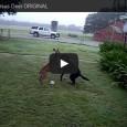 """Ein Hirsch """"kämpft"""" gegen einen Hund. Wer gewinnt?"""