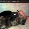 Rollige Katze lässt sich von Mini-Hund zerrupfen.