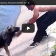 Top 10 Most Inspiring Dog Rescues – Hund retten Leben