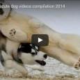 Die lustigsten Zusammenschnitte von amerikanischen Hunden. Eine der besten, die wir je gesehen haben