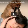 Werden Sie von ihrem Hund genau so geweckt? Vielleicht können Sie ihn ja dahingehend trainieren 😉