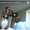 Diese Hunden drehen beim Handyklingelton total ab und können nicht verstehen wo die Geräusche herkommen.