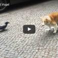 Freche Krähe ärgert kleinen Hund