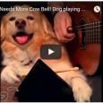 Auch Hunde können musizieren – Sehen Sie selbst