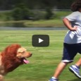 Dieser Löwenhund Familien und Kinder. Dabei will er doch nur spielen…