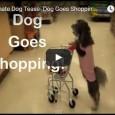 Sunny geht selbstständig im Supermarkt einkaufen – Einfach zum totlachen