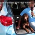 Skandal – Hund wartet treu im Auto auf sein Herrchen und stirbt durch Hitze