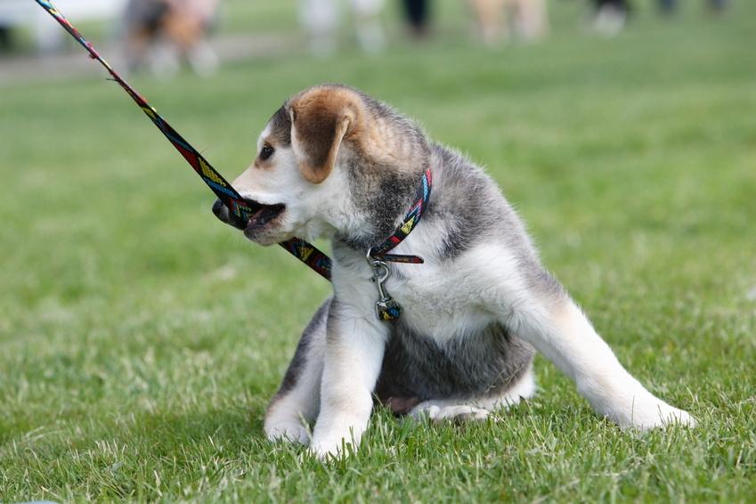 Der Hund ist oft der beste Freund des Menschen.