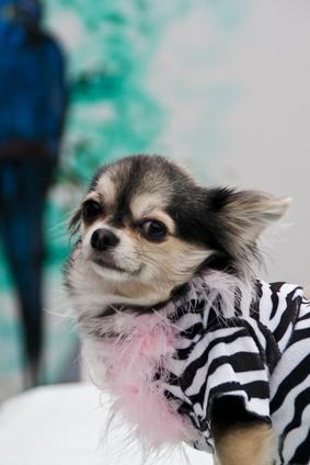Hundemode ist ein unerschöpfliches Thema bei Frauchen und Herrchen, die selbst großen Wert auf Stil und Chic in ihrer persönlichen Erscheinung legen. Der trendigen Bandbreite in der Hundemode sind fast […]