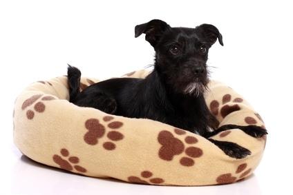 Rückzugsmöglichkeit in Hundekörbchen oder Hundebetten sind ganz wichtig