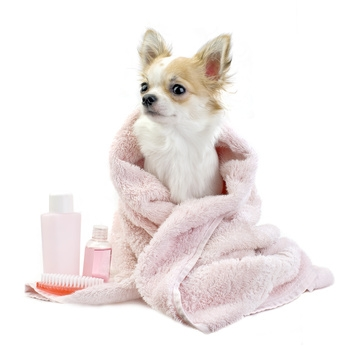 Je nach Hunderasse ist eine besondere Pflege nötig, für die man den Hundesalon besuchen oder sie in den meisten Fällen auch zuhause erledigen kann. Langhaarige Hunde brauchen eine intensivere Fellpflege, […]
