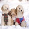So ein Hundewetter und trotzdem muss Hund und Herrchen vor die Tür. Doch auch für den Spaziergang mit dem Hund gilt, es gibt kein schlechtes Wetter nur unpassende Kleidung. Gerade […]