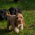 """Um einem Hund die Stubenreinheit anzugwöhnen, ist es von Nöten dem Tier an einen Ort zu gewöhnen, an dem er sich seiner """"Unreinheiten"""" entledigen kann. Das heißt, immer wenn der […]"""