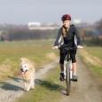 Das Radfahren mit einem Hund stellt eine ideale Möglichkeit dar, sowohl dem Halter als auch dem Vierbeiner ein wenig sportliche Betätigung zukommen zu lassen. Gesunde Hunde haben in der Regel […]