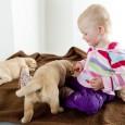 Die Erwartung eines neuen Familienmitgliedes ist ein freudiges Ereignis. Genauso wie die Familie selbst, sollte auch der Hund darauf eingestimmt werden. Die ersten Überlegungen sollten die Hygiene betreffen. Der Hund […]