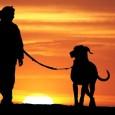 """Viele Hundebesitzer werden sich und ihren Hund in folgendem Beispiel wiedererkennen können: das Herrchen bzw. Frauchen will in die eine Richtung, der Hund jedoch in die andere. Dieser tagtägliche """"Kampf"""" […]"""