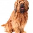 """Gerade bei älteren Hunden kann das Gehör stark nachlassen. Reagiert der Hund noch auf ein geflüstertes """"Gassi gehen!"""", ist er lediglich stur. Hört er jedoch auf gar nichts mehr, bzw. […]"""
