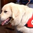 Mantrailing kommt aus dem Englischen und beschreibt die menschliche Spurverfolgung durch Hunde. Was früher Arbeitsalltag von Polizei- und Katastrophenschutzhunden war, ist inzwischen zum beliebten Hundesport geworden. Prinzipiell können alle Hunde […]