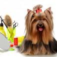 Langes Hundehaar lässt sich mit einem feuchten Schwamm wesentlich leichter und schneller vom Teppichboden und von den Polstermöbeln entfernen, als kurze Hundehaare, die sich hartnäckig in den textilen Bezügen und […]