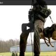 Diensthunde der Bundeswehr – Kampfmaschinen auf 4 Pfoten