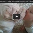 Nette Hunde Küssen Babies – Lustige Hunde geben Babys Küsse Compilation 2014