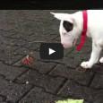 Krabbe vs Hund – Wer gewinnt?