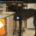 Zeus – Der größte Hund der Welt