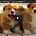 Für Frauen: Cute puppies barking and talking – Süße kleine Hunde versuchen sich zu unterhalten