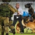 4 Hunde einer israelischen Spezialeinheit gegen einen Mann. Wer könnte da wohl gewinnen?