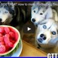 Ein paar coole Hundsnacks für den Sommer. Diese wurden aus einer zerkleinerten und dann gefrohrenen Wassermelone hergestellt. Seht selbst…