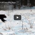 Wahnsinn – 2 Hunde schlagen einen Bären in die Flucht