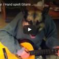 Schäferhund spielt wie ein junger Gott auf der Gitarre. Oder etwa nicht?…