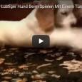 Hunde spielen mit Türstoppern – eine herrliche Compilation