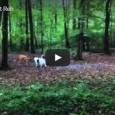 Ein ungewöhnliches Bild – Hund spielt mit Reh