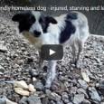 Ein freundlicher obdachloser Hund der zum sterben in den Wald gebracht wurde. Wer macht sowas?