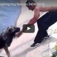Die 10 inspirierendsten Rettungen von Hunden