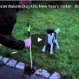 Hund killt Silvesterrakete und kommt mit dem Leben davon.