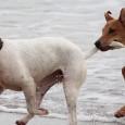 Eine gute Hundeerziehung ist die Basis für ein ungezwungenes und harmonisches Zusammenleben mit Ihrem vierbeinigen Freund. Die Kommunikation zwischen Hund und Mensch muss stimmen, denn schließlich sprechen wir nicht […]