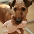 Eine gute Hundeerziehung ist die Basis für ein ungezwungenes und harmonisches Zusammenleben mit Ihrem vierbeinigen Freund. Die Kommunikation zwischen Hund und Mensch muss stimmen, denn schließlich sprechen wir nicht die […]