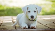Der Hund löst sich auf Ihr Kommando Es kann nützlich sein, dem Hund das Lösen auf Kommando beizubringen. Stellen Sie sich beispielsweise eine Situation im Urlaub vor, bei der […]