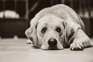 Jeder Hund wird irgendwann alt.