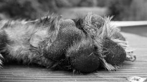 Der Abschied vom Hund ist schwer